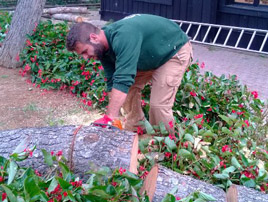 Pruning and Felling